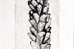 denneappel - zwart 10x20 cm