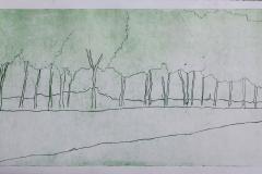 lijnets NH landschap groen