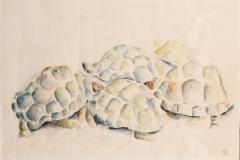 aquarel schildpadden